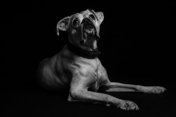 Hund,Haustier,Fotografie,Schwarzweiss,FineArt,Shooting,Studio,Düsseldorf