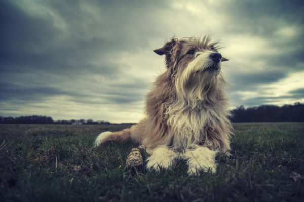 hund haustier shooting outdoor drama fotograf fotografie düsseldorf