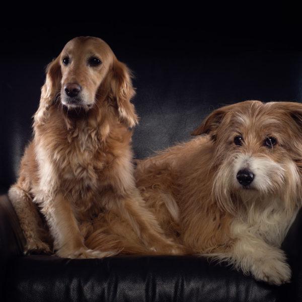 haustier hunde hund studio shooting haustiershooting düsseldorf fotograf fotografie