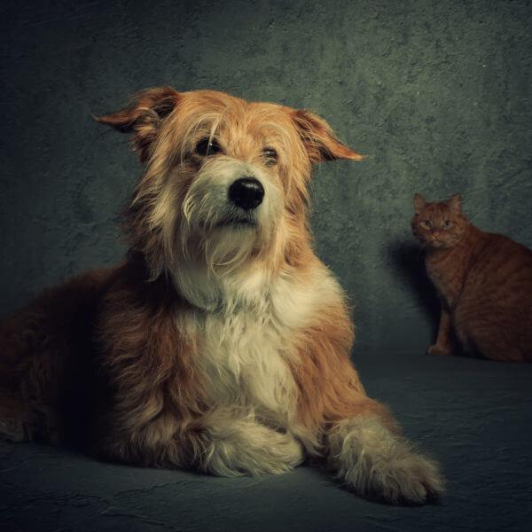 Hund / Katze / Studio / Haustier / Fotoshooting / Foto / Fotograf Michael Wipperfürth