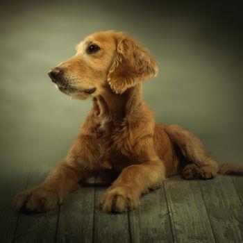 Hund / Studio / Haustier / Fotoshooting / Foto / Fotograf Michael Wipperfürth