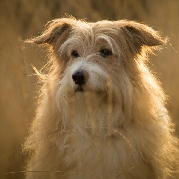 Hund / Outdoor / Haustier / Fotoshooting / Foto / Fotograf Michael Wipperfürth