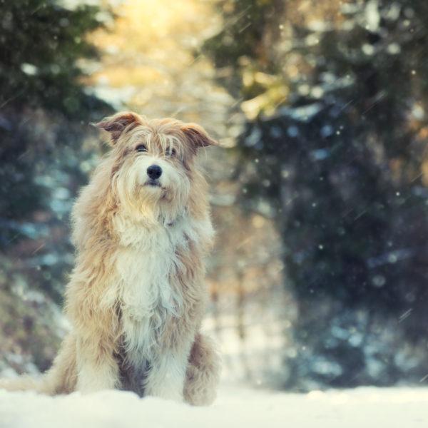 Hund / Outdoor / Winter /Schnee / Haustier / Fotoshooting / Foto / Fotograf Michael Wipperfürth