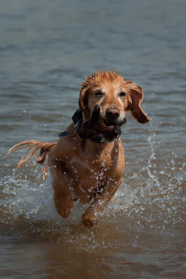Hund / Outdoor / Rhein / Bewegung / Action / Haustier / Fotoshooting / Foto / Fotograf Michael Wipperfürth