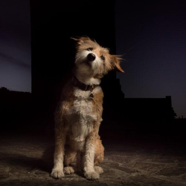 hund haustier ehrenburg fotograf fotografie