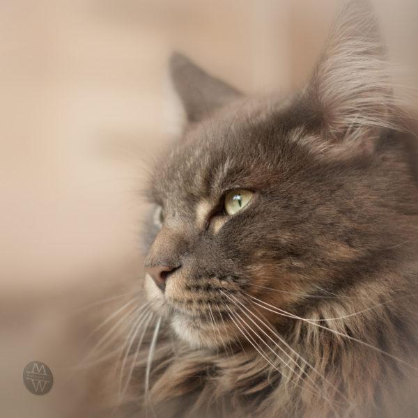 Katze / Homeshooting / Wohnung / Haustier / Fotoshooting / Foto / Fotograf Michael Wipperfürth