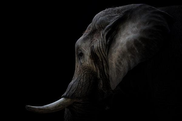 Elefant / FineArt / Print / Wandbild / Fotograf / Düsseldorf