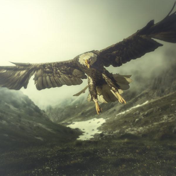 eagle highlands
